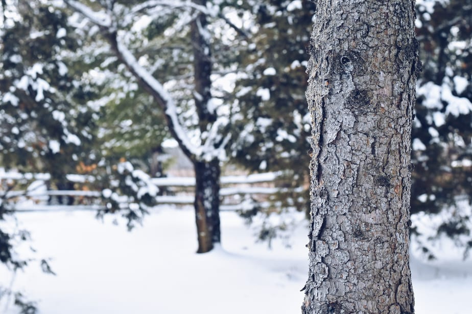 Photographie forêt enneigée / Snowy forest photography | cuisinedopamine.com
